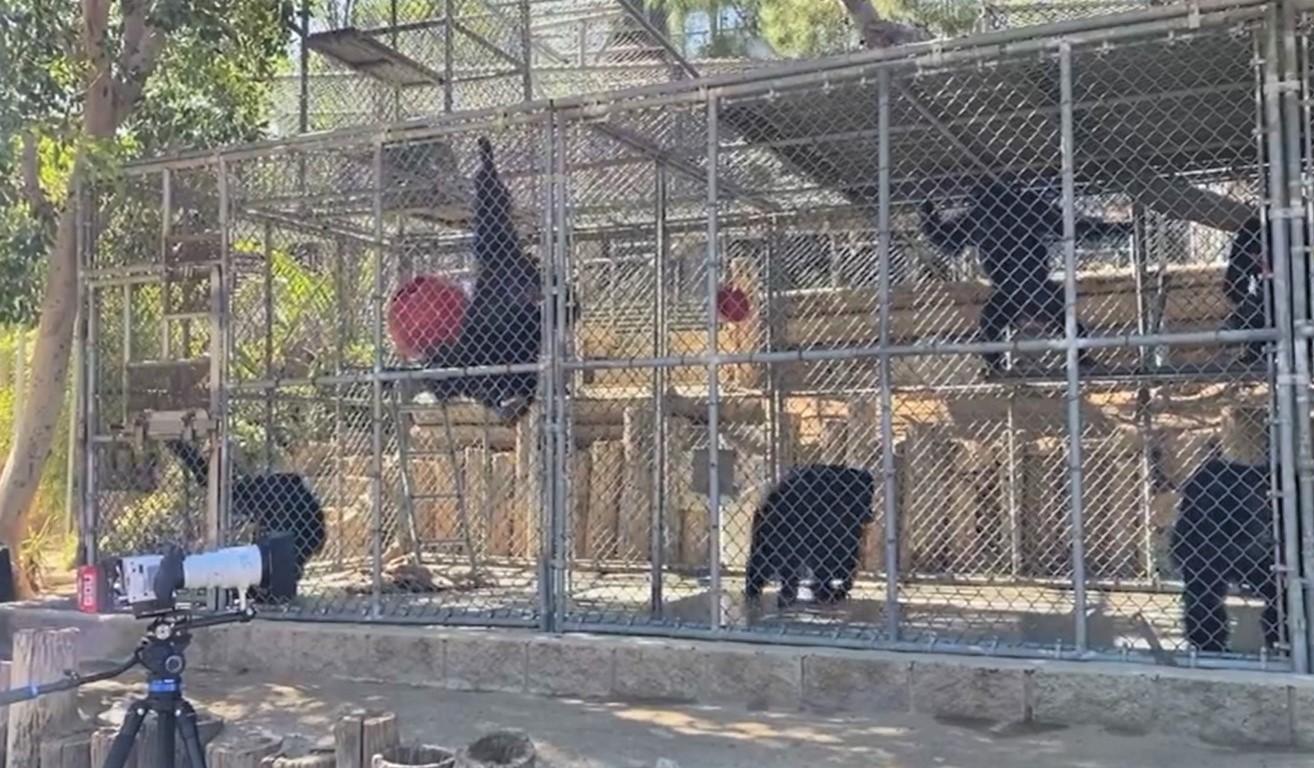 Wildlife Waystation group of seven headed to CGA